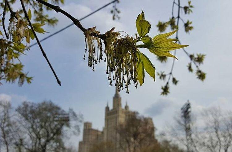 Москва столица город здание архитектура центр отдых день Природа Moscow Russia Rus Cool City Best  God Good фото фотография Природа пейзаж