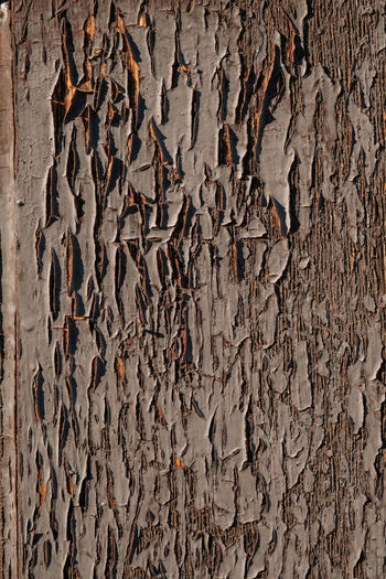 Close up texture of an old cracked wooden door Textures and Surfaces Backgrounds Wood - Material Cold Weather Full Frame Textured  Pattern Weathered Damaged No People Tree Trunk Rough Plant Bark Peeling Off Close-up Trunk Old Built Structure Wall - Building Feature Architecture Tree Bad Condition Textured Effect
