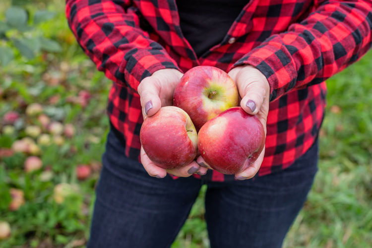 Midsection of person holding apple on field