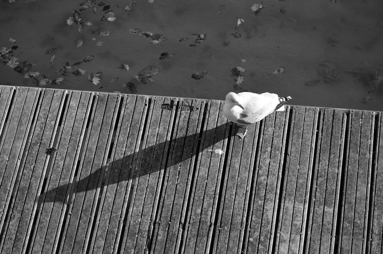 High Angle View Of Seagull On Pier Against Sea