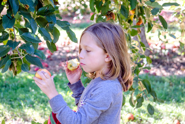 an adorable little girl picks apples in a Michigan USA orchard Autumn Females Happy Active Basket Caucasian Child Childhood Day Fall Girl Kid Michigan Orchard Nature One Person Outdoors Picking Apples Seasonal Tree Food Stories Autumn Mood