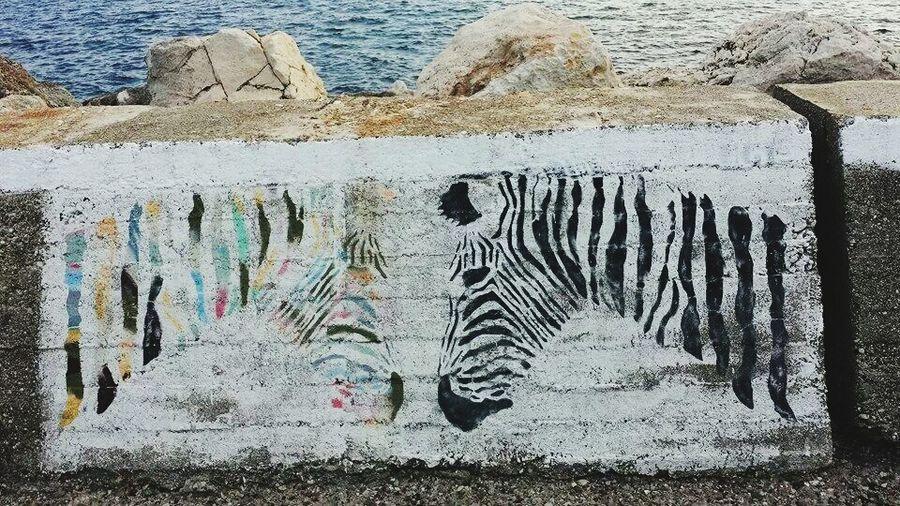 Blackandwhite Color Zebra Harbourwalk Harbor Wall Greece