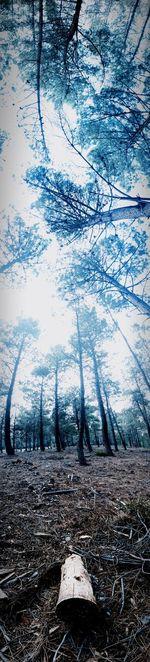Bare trees on landscape