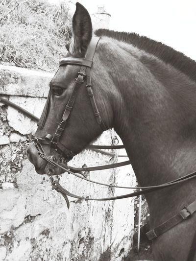 Horses Caballos Beautiful Black And White