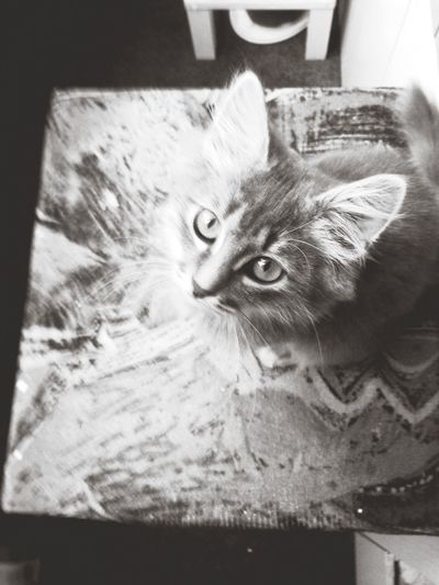 Catsagram
