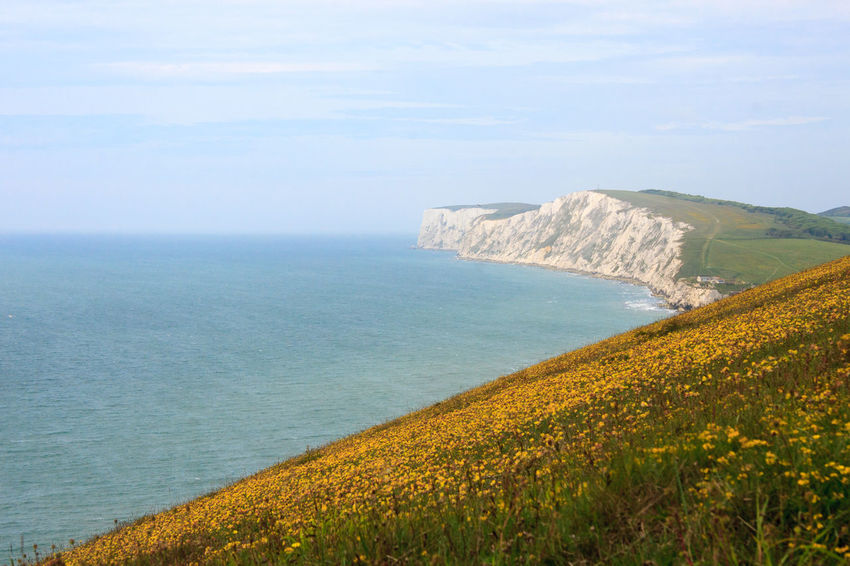 Cliffs and Flowers, Isle of Wight. Beauty In Nature Cliffs Coastal Landscape Coastline Countryside Horizontal Isle Of Wight  Landscape Pretty Sea Sea View Water White Cliffs  Wildflowers Yellow Flowers
