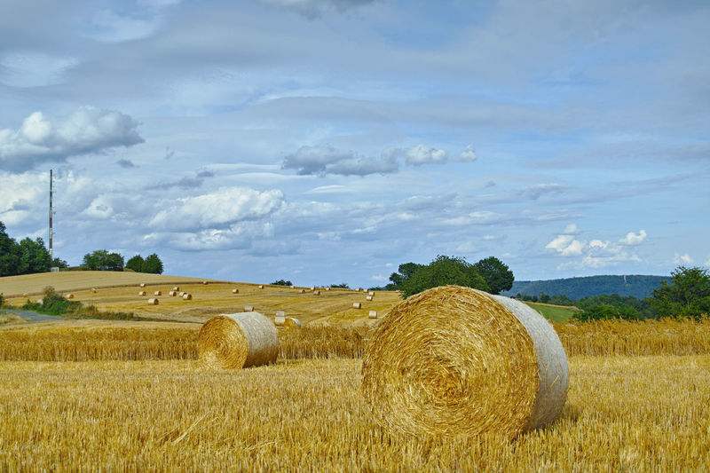 Hay Bale  Field Plant Sky Agriculture Cloud - Sky Landscape Land Rural Scene Farm Rolled Up Environment Nature Scenics - Nature Tranquility Tranquil Scene Beauty In Nature Day Growth No People Outdoors Rundstrohballen Abgeerntetes Feld Stoppelfeld