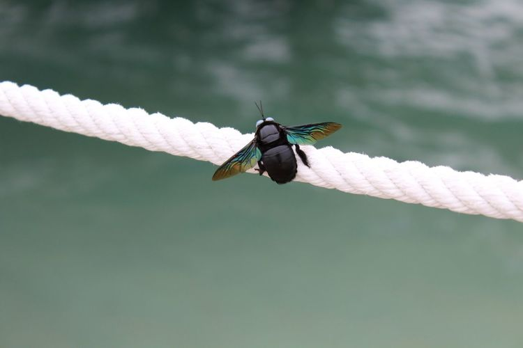 Close-Up Of Fly Perching On Rope