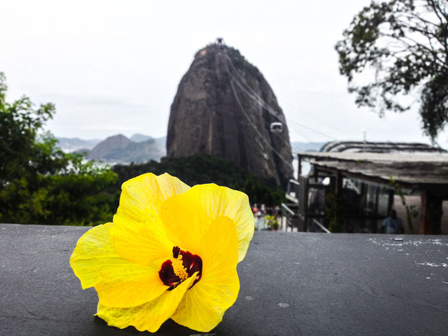 All and bit more about Rio de Janeiro Architecture Brazil Chinese View Holiday Rio De Janeiro Rio De Janeiro Eyeem Fotos Collection⛵ Sunset_collection Travel Vista Chinesa Beauty In Nature Close-up Day Flower Flower Head Focus On Foreground Fragility Freshness Nature No People Outdoors Rio De Janeiro, Brazil Sky Sugarloaf Sunrise Sunset Travel Destinations Yellow Yellow Taxi