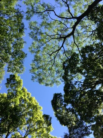 Tree Low Angle View Plant Sky Growth Beauty In Nature Nature Day No People Outdoors Green Color Branch Clear Sky Blue Sunny Green