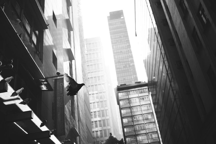 Black & White Animal Themes Architecture Black And White Black And White Photography Blackandwhite Photography Blackandwhitephotography Building Exterior Built Structure City Day Low Angle View No People Outdoors Sky Skyscraper