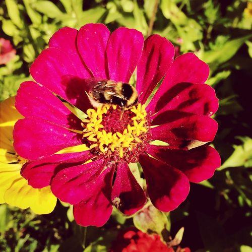 Nature Flower лето дача