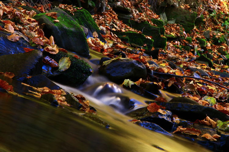 Water Plant Part Leaf Nature Day Rock High Angle View No People Rock - Object Autumn Solid Outdoors Beauty In Nature Land River Sunlight Selective Focus Change Moss Leaves Flowing Water Capture Tomorrow