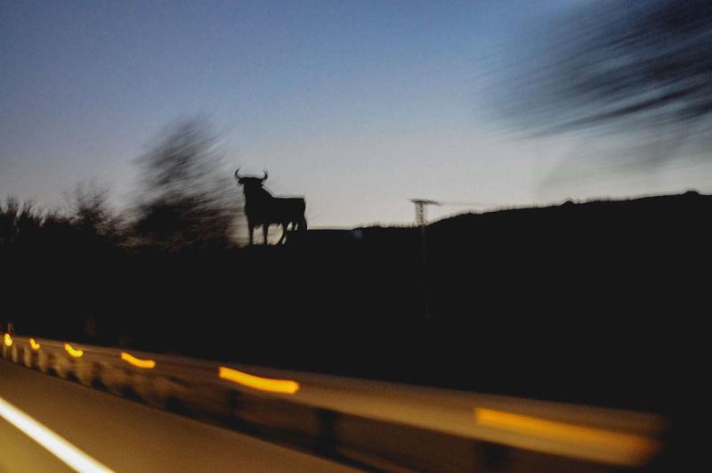 Osborne bull cutout Sky Mammal Animal Silhouette One Animal Nature Transportation Sunset No People Dusk Outdoors Road Motion Standing Bull Advertisement Typical Spanish Osborne Bull on the move Travel Black Bull CutOut