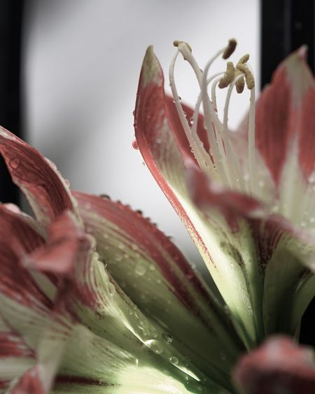 Close-up of day lily plant