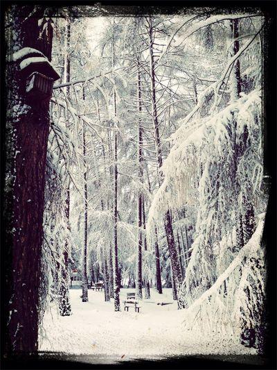 Nature Winter Wonderland All Is Quiet ... <3