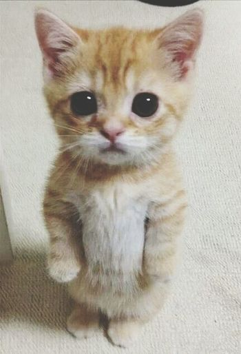 so cute... Cat Ilovecats