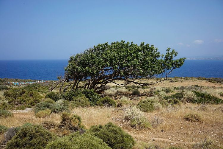 Greece Crete Sea Sky Water Plant Beauty In Nature Tranquility Scenics - Nature Horizon Over Water Beach Nature Growth Tranquil Scene Land Horizon Tree Clear Sky No People Day Blue Outdoors