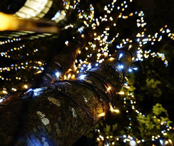 入試行った時に大阪駅 の近くで撮りました📷 もうクリスマス 一色ですね🎄 はたして受験生にクリスマスは来るのでしょうか!? 明日は模試!がんばるぞう ライトアップ 受験生 ドキドキ Japan OSAKA Lighting Lightup Christmas Xmas Night Beautiful Tree Sleepy Pic Like4like Up キラキラ きれいだった 過去pic 第一志望合格し隊 サムイ 夜 図書館 カイロ jhp team_jp f4f