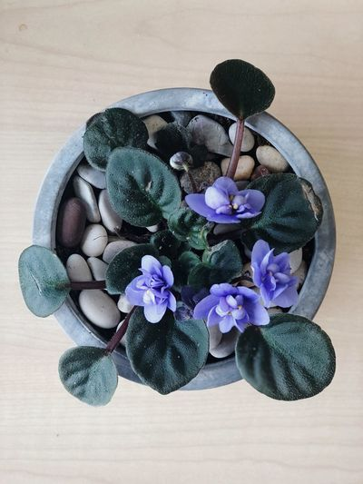 High angle view of purple flower on table