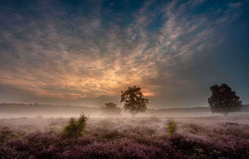 Morning fog over the heathland Netherlands Sky And Clouds Beauty In Nature Day Fog Heather Holland Landscape Mist Nature No People Outdoors Scenics Sky Sunset Tranquil Scene Tranquility Tree