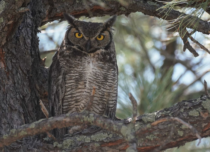 Low angle view of owl on tree trunk