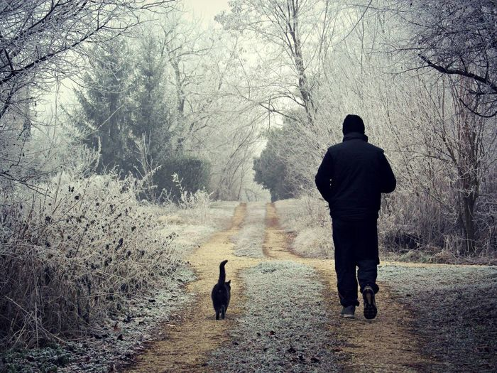 Rear view of man and cat on road