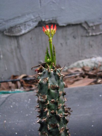 Crown of