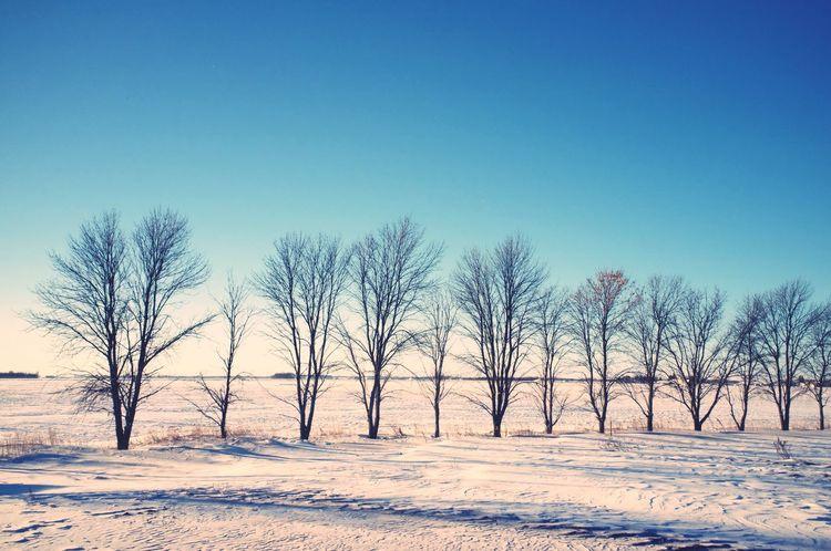 January 9, 2016 QVHoughPhoto FujiFilmX100 Moorhead Minnesota Landscape Trees Winter Snow