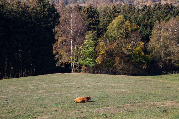 View of an animal on field