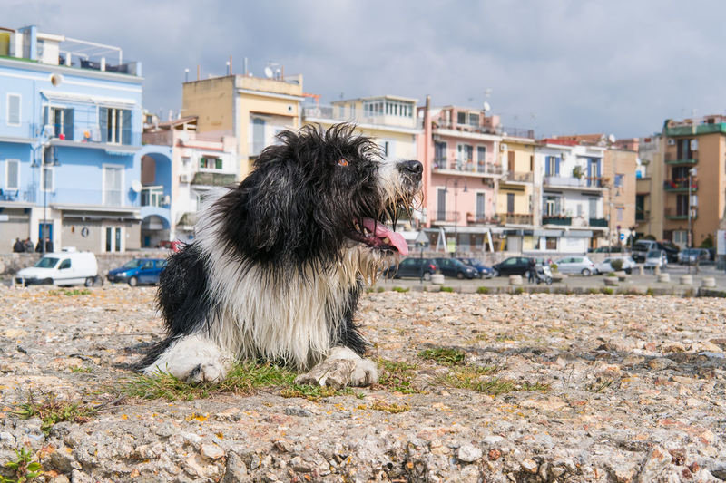 Dog In City Against Sky
