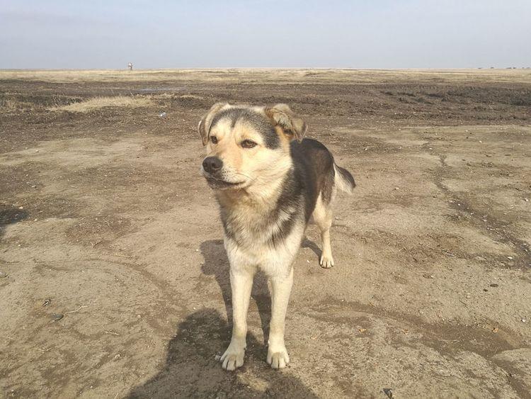 One Animal Animal Themes Shadow Domestic Animals Pets Nature Dog HuaweiP9