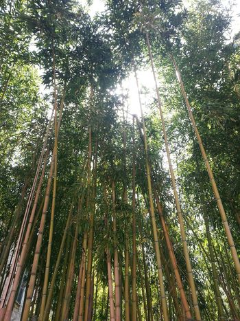Bamboo Forest Rome Italy