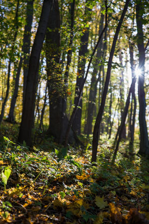 Colors Autumn Beauty In Nature Change Day Forest Growth Landscape Leaf Nature No People Outdoors Scenics Sunlight Tranquil Scene Tranquility Tree Tree Trunk WoodLand