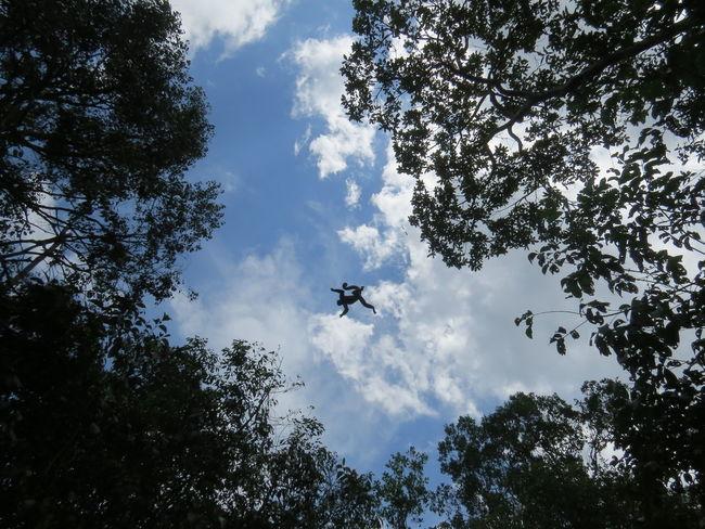 Amazon Amazon Monkey Amazon Rainforest Amazon River Amazonas Amazonas-Brasil Animal Themes Animals In The Wild Brazil Flying Low Angle View Monkey Monkey In Flight Nature At Its Best Nature Up Close Primate