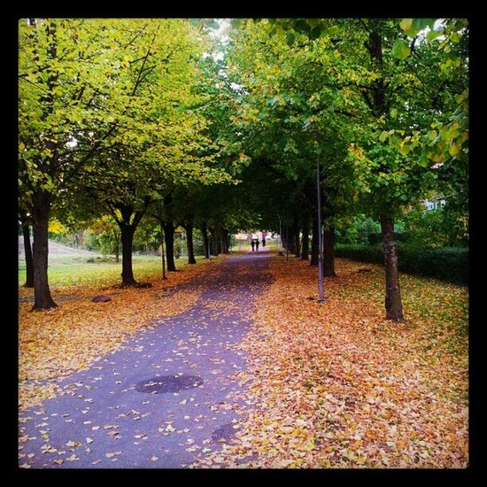 Autumn in Bergshamra Stockholm Sweden høst sverige allé alley colours