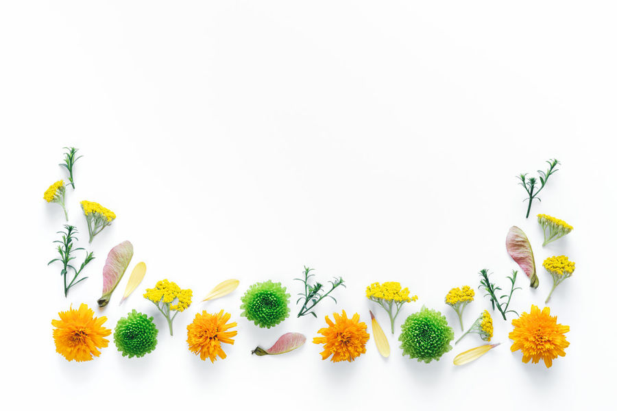 Creative border of colorful flowers on white background. Above Arrangement Border Close-up Colorful Composition Copy Space Copy Space Creative Flat Lay Floral Flower Flower Head Freshness Green Color Nature No People Orange Color Petal Plant Springtime Studio Shot Summer White Background Yellow