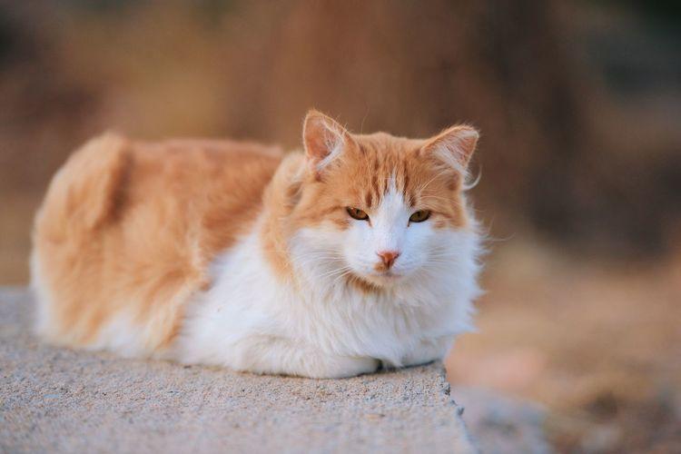 Cat resting on retaining wall