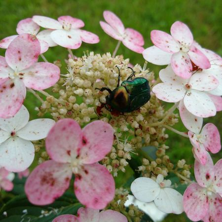 memory of summer Flower Freshness Beauty In Nature Insect Plant Outdoors Nature
