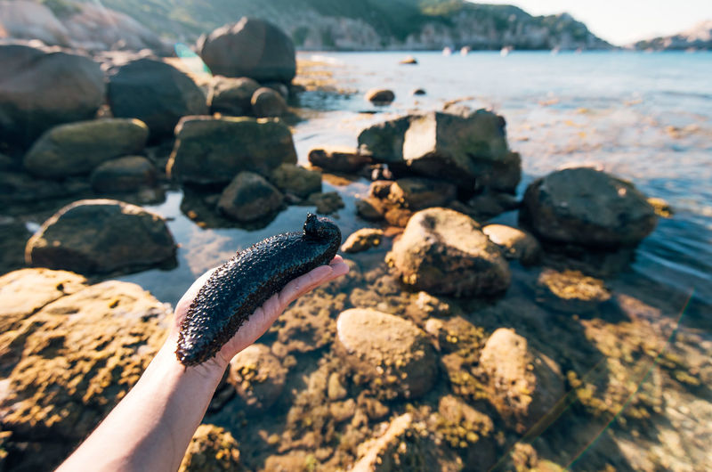 Cropped hand holding sea cucumber