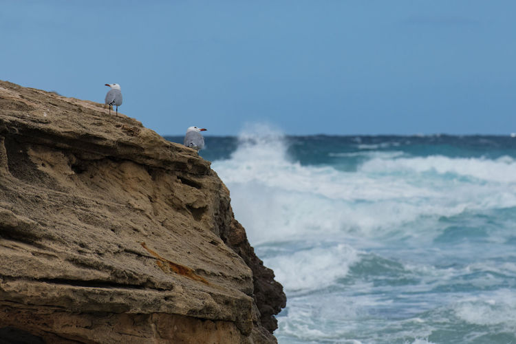 Seargull Couple Animal Animal Themes Sea Vertebrate Bird Animal Wildlife Animals In The Wild Water One Animal Rock Perching Solid Rock - Object Sky Day Nature Land Motion No People Seagull Outdoors