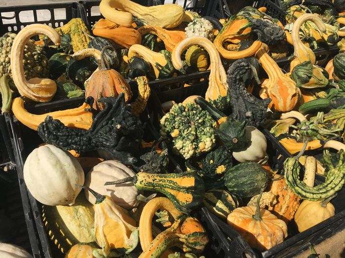 Vegetable Food Healthy Eating Food And Drink Choice Variation Freshness No People High Angle View Pumpkin For Sale Abundance Retail  Market Day Outdoors Squash - Vegetable