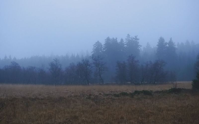 Plant Landscape Tree Environment Fog Land Tranquility No People Tranquil Scene Scenics - Nature Sky Nature Forest Grass Beauty In Nature Field Day Non-urban Scene Outdoors Pine Woodland Coniferous Tree Dark Fall Beauty Cold Weather