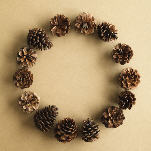 High angle view of pine cone against white background