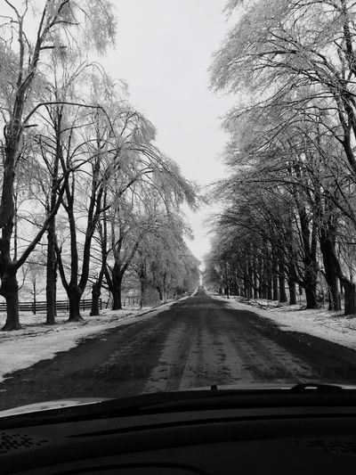 Driving In The Car - Tree Lined CountryRoad - Ice Covered Trees Ice Covered  Road Road Trip Roadtrip Icy Branches Nature Photography After The Storm Driving The Back Roads Driving Around Tree Lined Street Driving In My Car Tree Lined Drive Country Drive Inside The Car Car Ride! Country Roads Driving In The Car