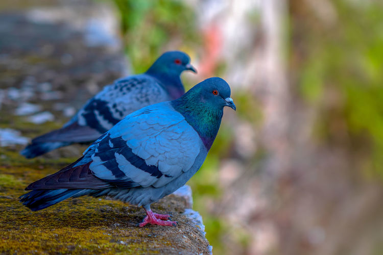 Bird Animal Animal Wildlife Animal Themes Vertebrate Animals In The Wild Focus On Foreground No People Day Close-up Solid Group Of Animals Nature Perching Two Animals Rock Rock - Object Outdoors Beauty In Nature