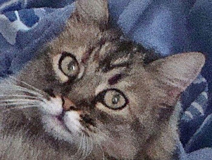 Pour Toujours Mon Bb D'amour Portrait Domestic Cat Feline One Animal Animal Themes