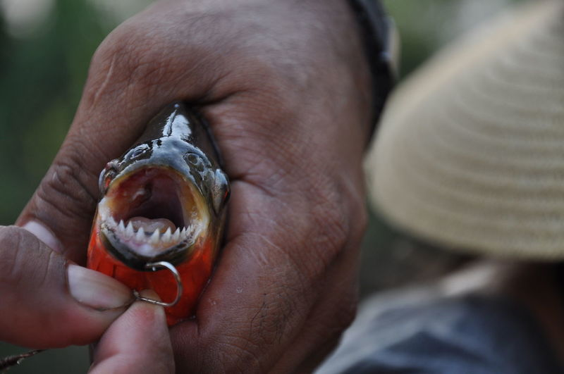 Close-up of man holding fish