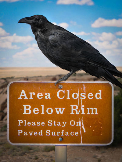 Raven bird perching on road sign at petrified forest national park
