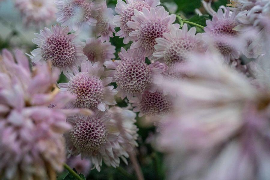 Flower Flowering Plant Plant Beauty In Nature Flower Head No People Denverbotanicgardens Denver